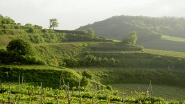 Who is the designer of landscapes?